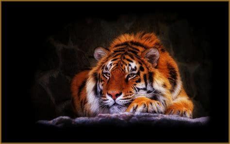 imagenes en 3d de tigres descargar fondo de pantalla tigres de aragua archivos
