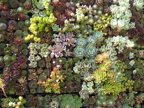 Succulent Wall Art Papery Cakery Wall Succulent Garden