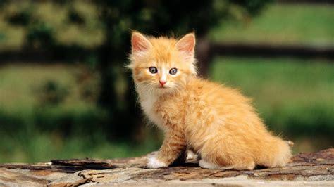 imagenes animal x gatitos bebes fotos de flores y animales