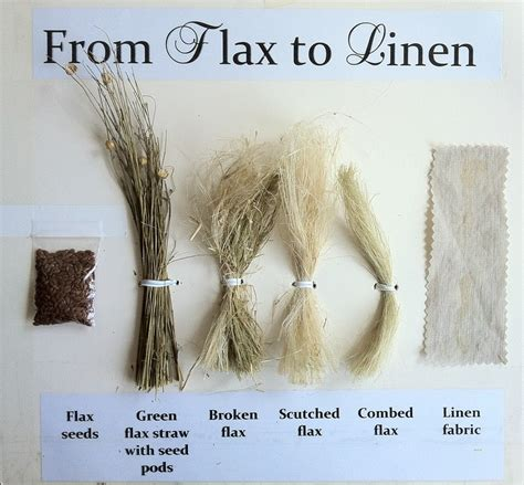 Flax to linen display life giving linen