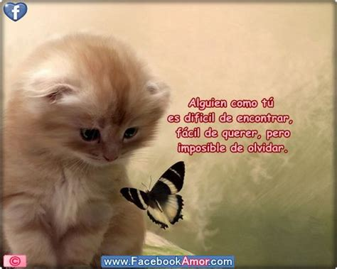 Imagenes Lindas De Amistad Para Facebook | the 25 best ideas about imagenes con frases lindas on