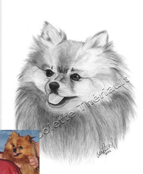 how to draw a pomeranian puppy small pomeranian vector drawing illustration in black and white stock vector