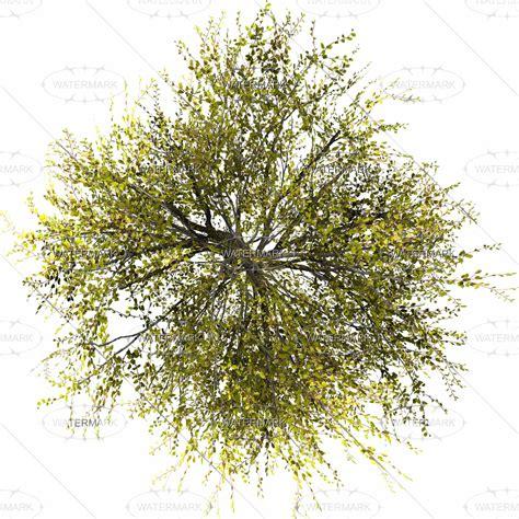 Olive Garden Floor Plan topview vol 1 vbvp p top topview0 vol 00 01 00 0 all