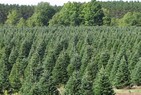 christmas tree farms in southeast michigan pin michigan on
