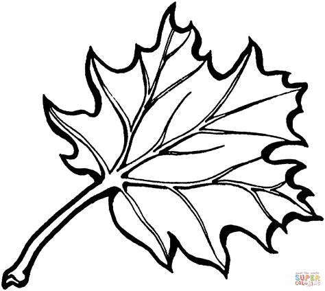 tree leaf coloring page ausmalbild blatt einer schwarzeiche ausmalbilder