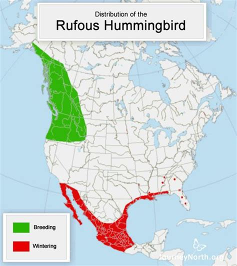 hummingbird spring migration news journey north