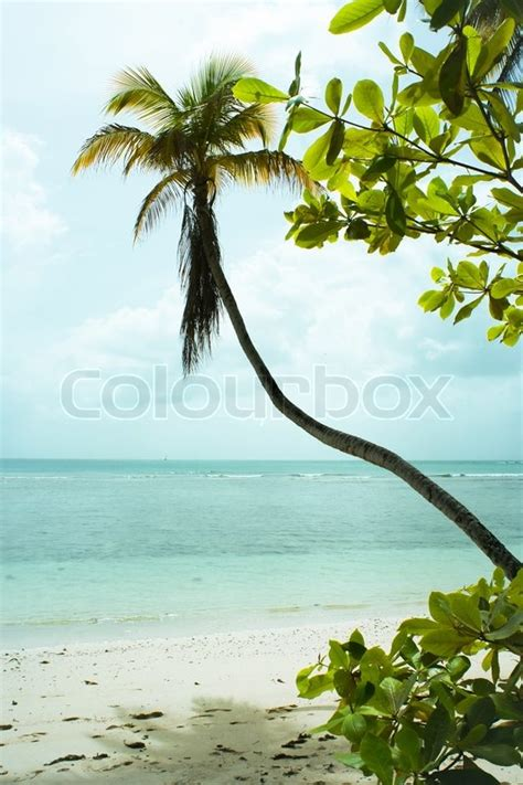 beautiful hawaiian shrub plants trinity by the sea landscape scenery of a beautiful tropical island with