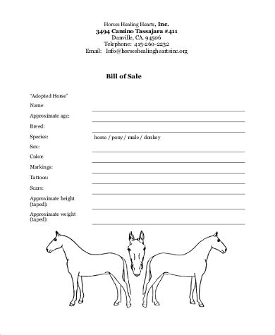 Horse Bill Of Sale Sles 8 Free Documents In Word Pdf Animal Bill Of Sale Template