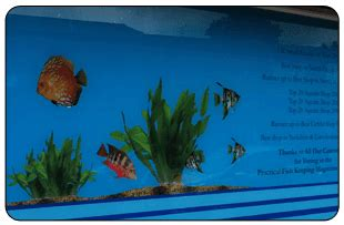 aquarium design yorkshire professional window graphics from sticker box in goole