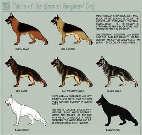 types of shepherd dogs german shepherd coat colors breeds coats colors and german shepherds