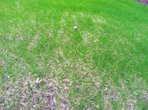 lawn lad landscaper watering new grass seed