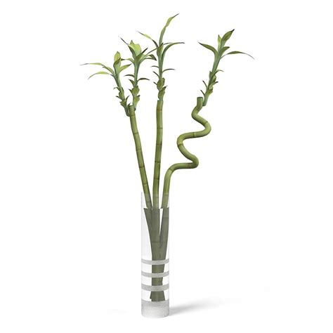 Ikea Tall Glass Vase 3ds Max Ikea Lucky Bamboo