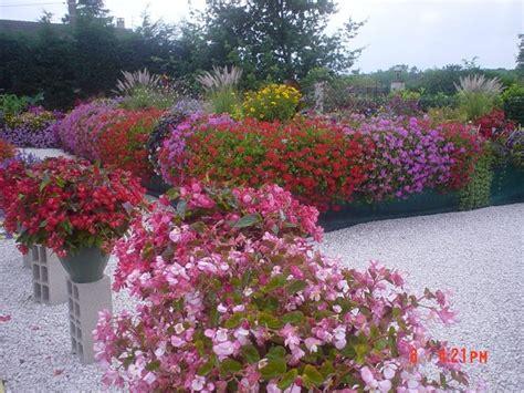 piante per fioriere fiori per fioriere vasi e fioriere fiori fioriere