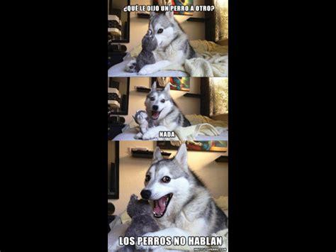 bad dog pun conoce el origen del meme del perro alaska