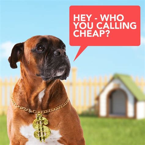 cheap neutering for dogs cheap dogs top 10 budget friendly pooches care community