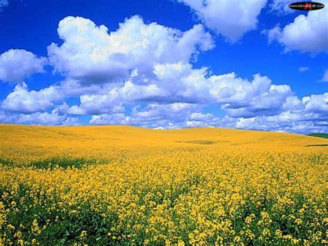 immagini prato fiorito sfondo desktop prato fiorito di cagna paesaggi20
