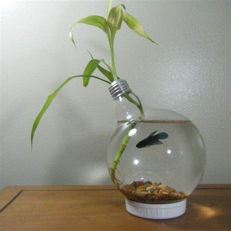 Handmade Light Bulbs - 42 best images about betta fish tank ideas on