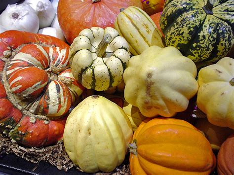 winter squash wikipedia