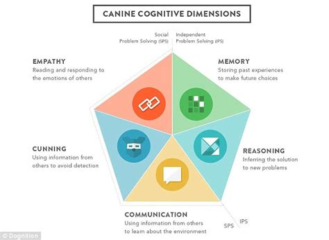 types of dogs and their personalities how clever is your website uses to test the intelligence and even