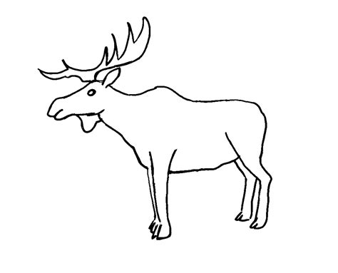 coloring book pages moose free coloring pages of brown habitat