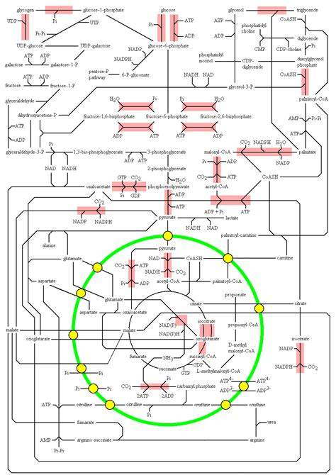 carbohydrates metabolism carbohydrate metabolism metabolism carbohydrate