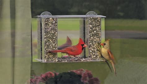why is this cardinal flying into my window car mirror or
