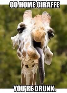 Meme Giraffe - drunken giraffe meme slapcaption com funny animal