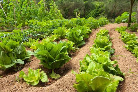 garten pflanzen im juli gartentipps im juli nutzgarten gartenzauber