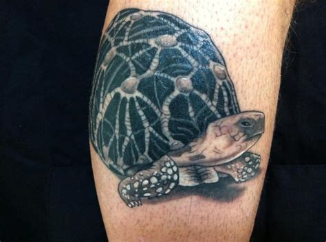 realistic calf turtle tattoo by cesar lopez tattoo