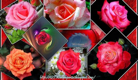 wallpaper flower rose free download desktop wallpaper background screensavers beautiful