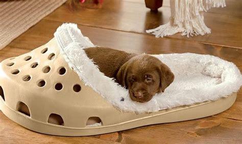 cucce da interno per cani cucce per cani da interno e lettini su soul
