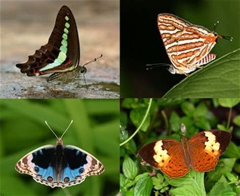 Plant Taxonomy Research Papers by Research Papers On Taxonomy Of Butterflies