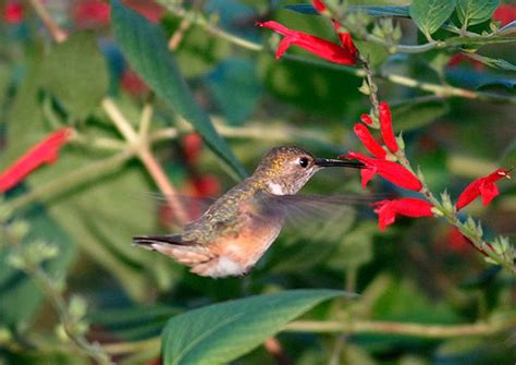 predict when hummingbirds will return