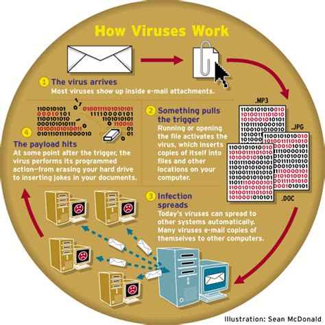 the stages of the functioning of computer viruses computer