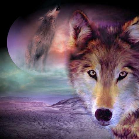 animal wolf ipad wallpaper wolves pinterest wolves