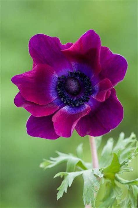 imagenes de flores mas bonitas flores m 225 s hermosas del mundo flowers pinterest