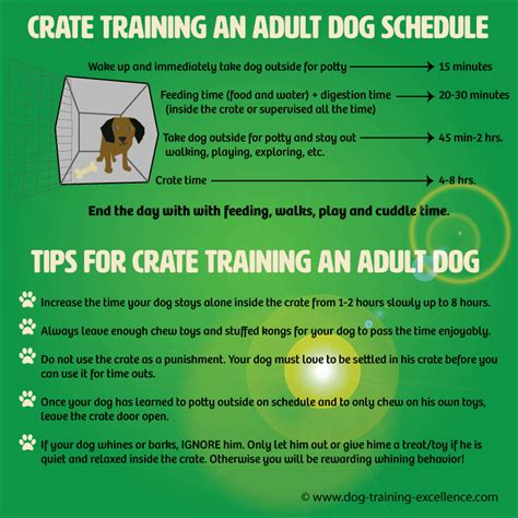 puppy crate schedule crate an the positive way