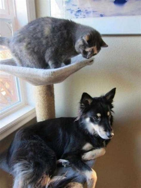 dogs that act like cats 25 dogs that behave like cats 25 photos