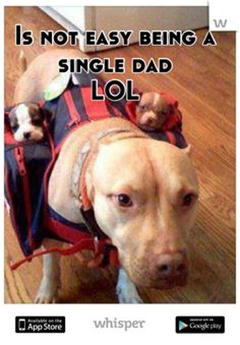 Single Dad Meme - 1000 images about single dads rock on pinterest single