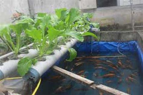 Pompa Aquarium Jogja masyarakat gunung kidul kembangkan tanaman aquaponik