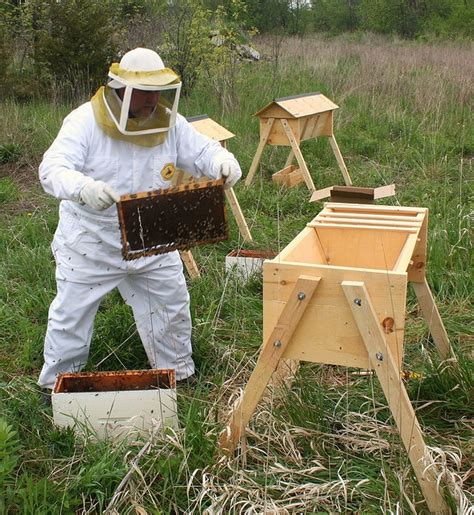 top bar beekeeping 1000 images about top bar hive ktbh obertr 228 gerbeute