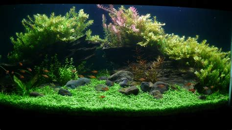 Aquascape Aquarium by Affable Aquarium Woody Aquascape