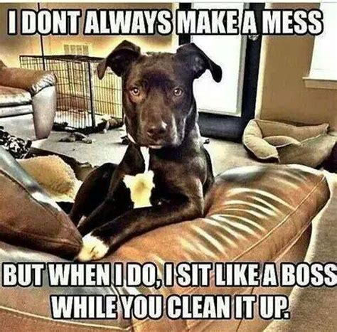 Mess Meme - don t always make a mess funny pictures quotes memes