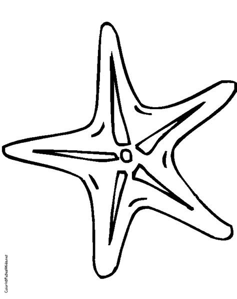 starfish coloring page timeless miracle com