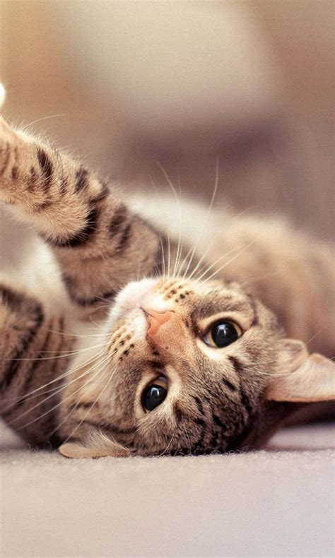 cat wallpaper for mobile hd 480x800 cute cat cell phone wallpapers hd mobile
