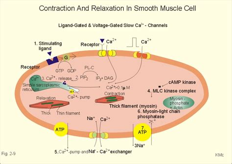 molecular mechanisms of atherosclerosis ebook the biology of magic k reviewed optimistic living