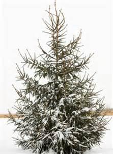 christmas tree buzzle com