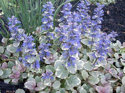 perennial gardening young wifey s blog