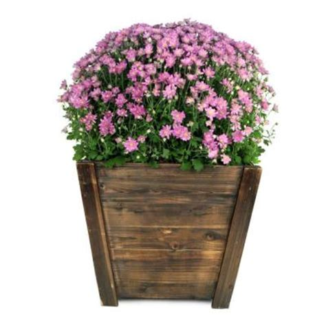Home Depot Wooden Planters by Pennington 16 In Wood Tapered Planter