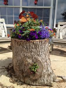 planter made from a hollow log tree branch ideas